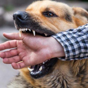 personal injury - dog bite